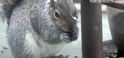 squirrel-001