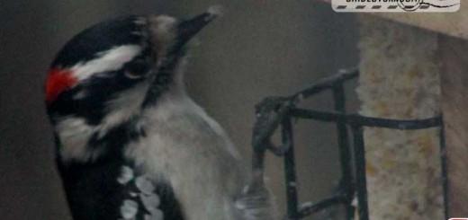 woodpecker-yard-003