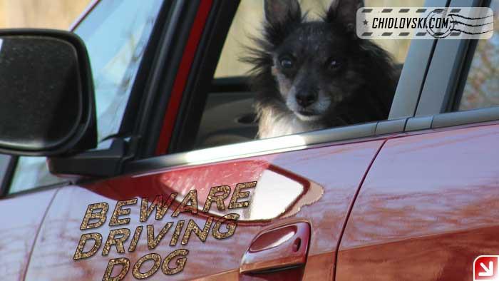 bernie-driving