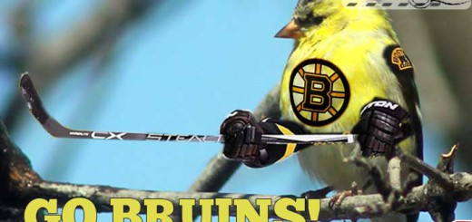 birds-go-bruins