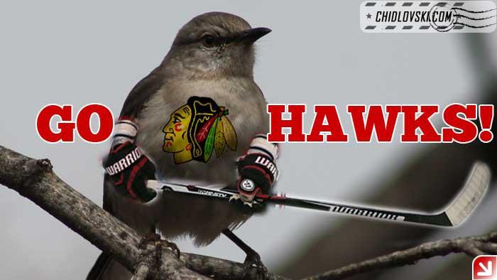 birds-go-hawks