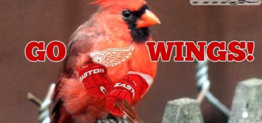 birds-go-wings