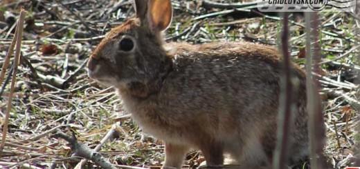 bunny-belle-isle