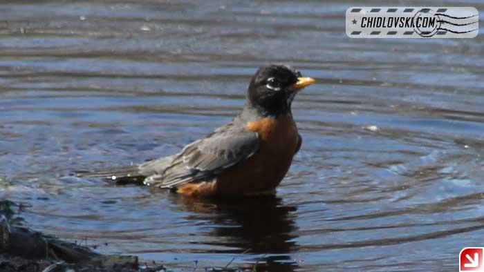 robin-bath-001