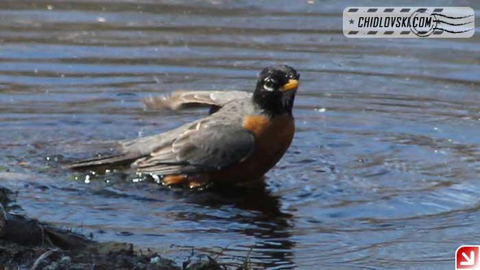 robin-bath-002