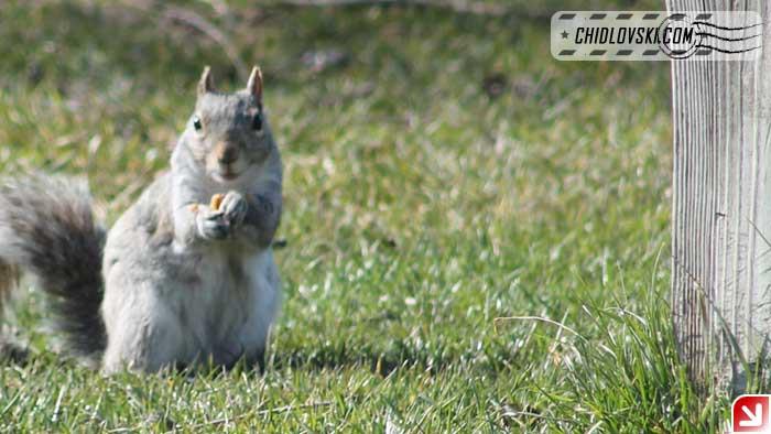squirrel-003