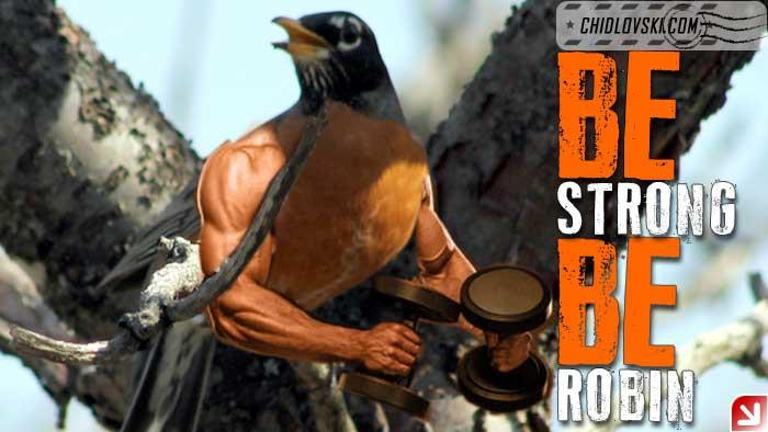 strong-robin