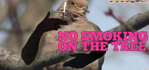 dove-no-smoking