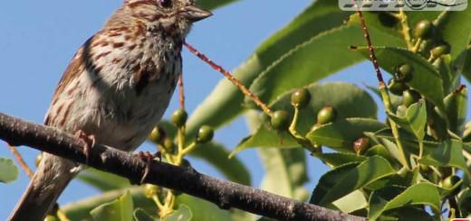 sparrow-16003