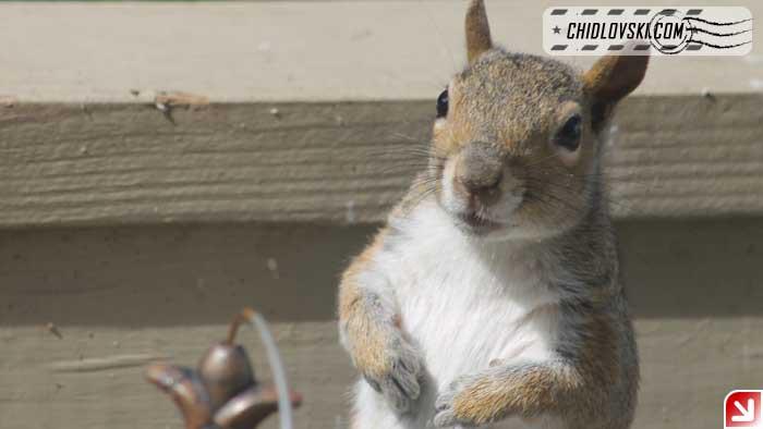 squirrel-16002