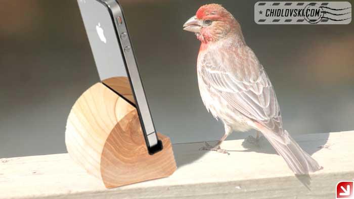birds-selfy-00