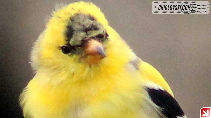 birds-selfy-02