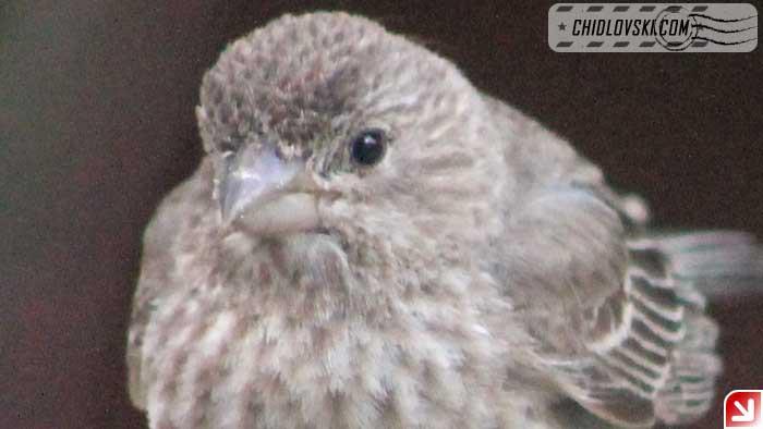 birds-selfy-07