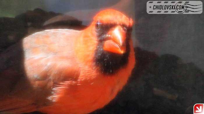 birds-selfy-08