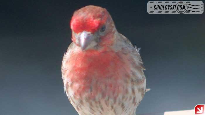 birds-selfy-09
