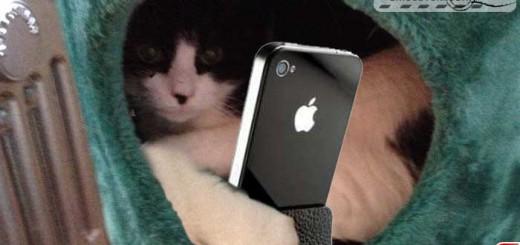 cats-selfy-01