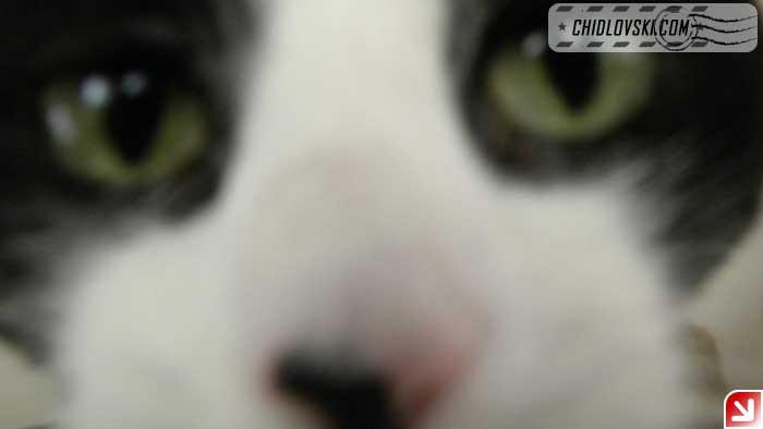 cats-selfy-02