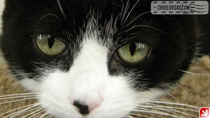 cats-selfy-04