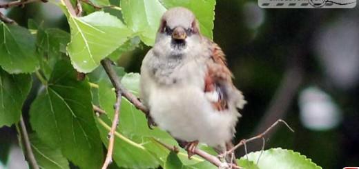 sparrow-16008