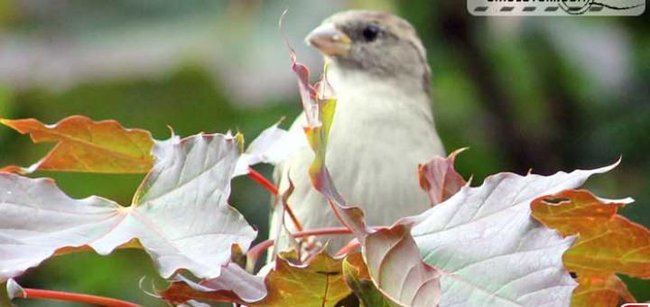 sparrow-16010
