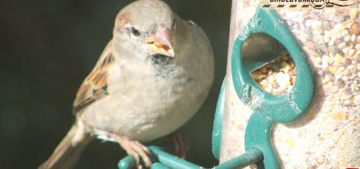 sparrow-16011