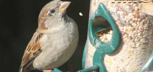 sparrow-16012