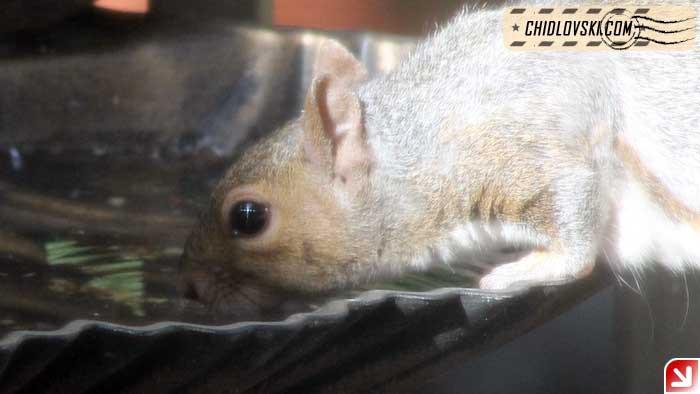 squirrel-16010