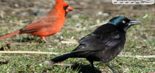 birds-17001