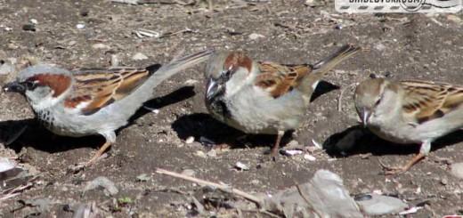 birds-17002