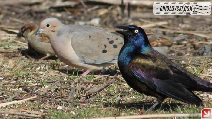 birds-17003