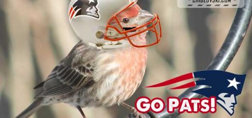 go-pats-birds
