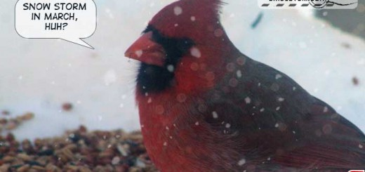 cardinal-17010