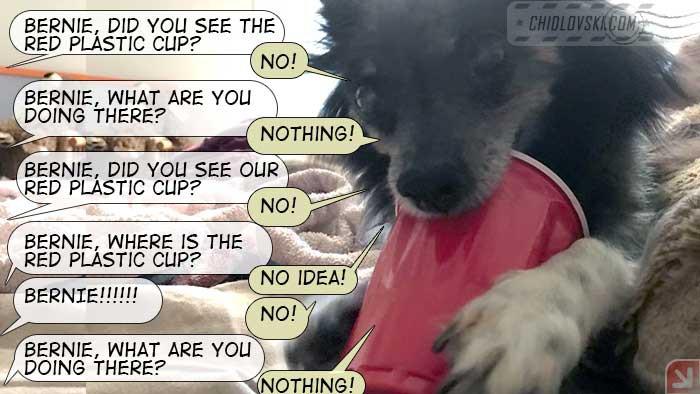 bernie-cup
