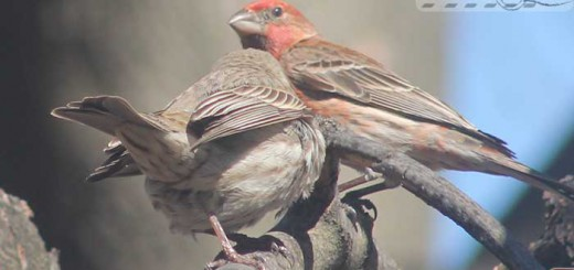 finches-17003