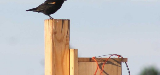 birdhouse-b001