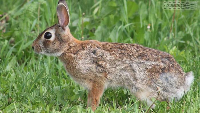 bunny-b001