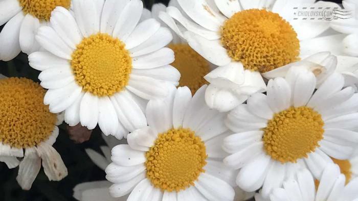 flowers-b001