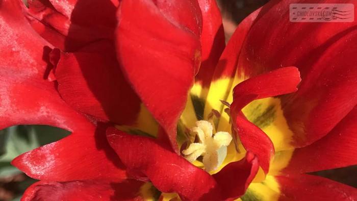 flowers-b004