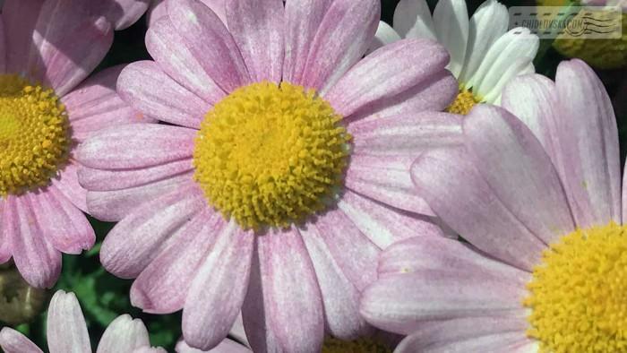 flowers-b005