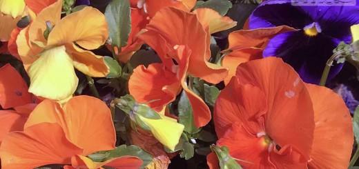 flowers-b006