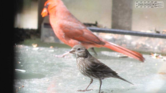 group_birds-b001