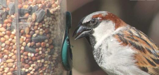 sparrow-b001