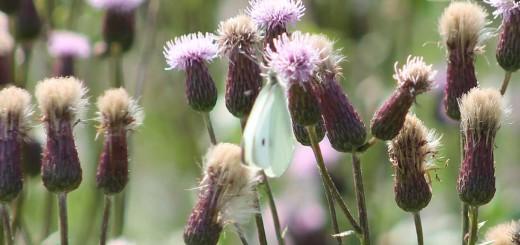 meadow-b001