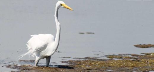 egret-b002