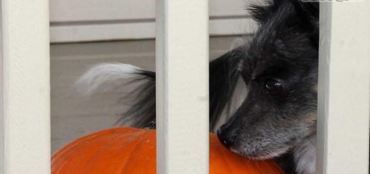 bernie-c-pumpkin