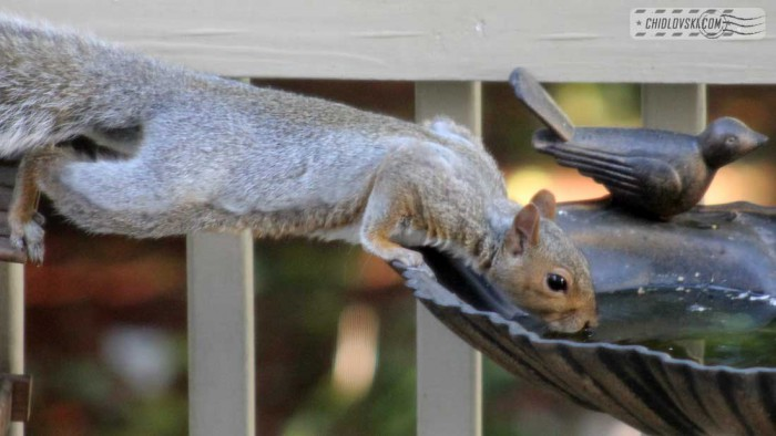 squirrel-b101