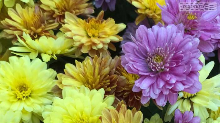 fall-colors-b001