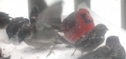 birds-b001