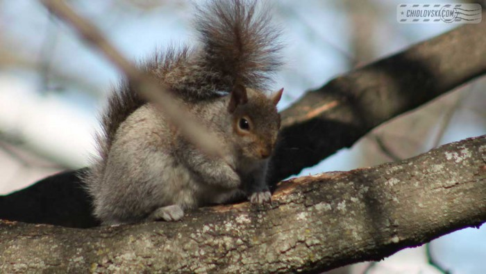 squirrel-b801
