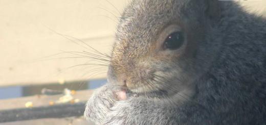 squirrel-b802